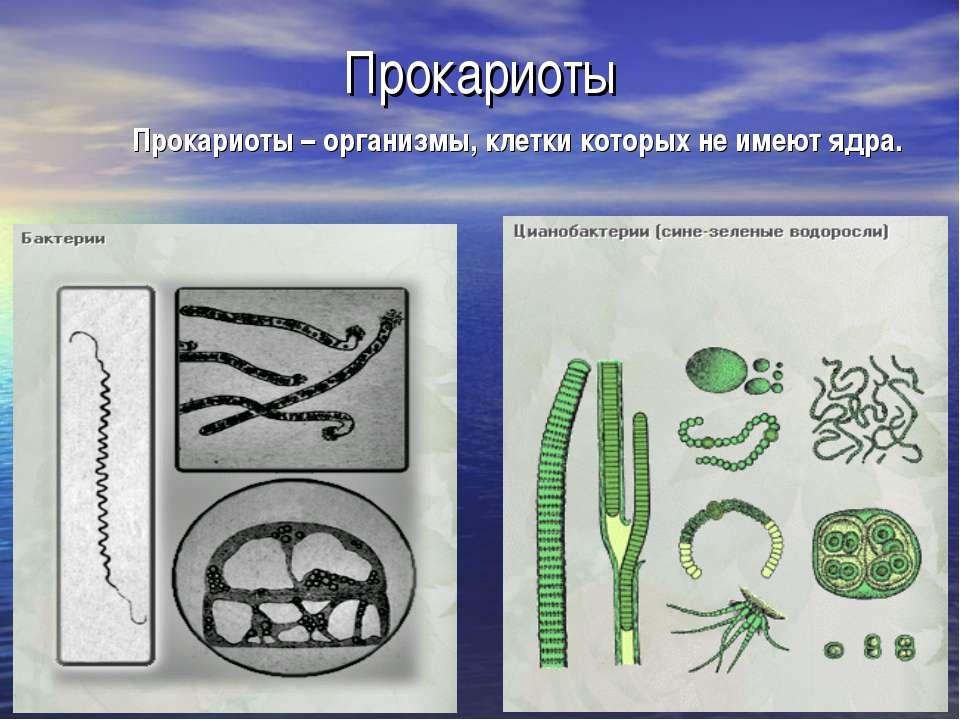 Прокариоты Прокариоты – организмы, клетки которых не имеют ядра.