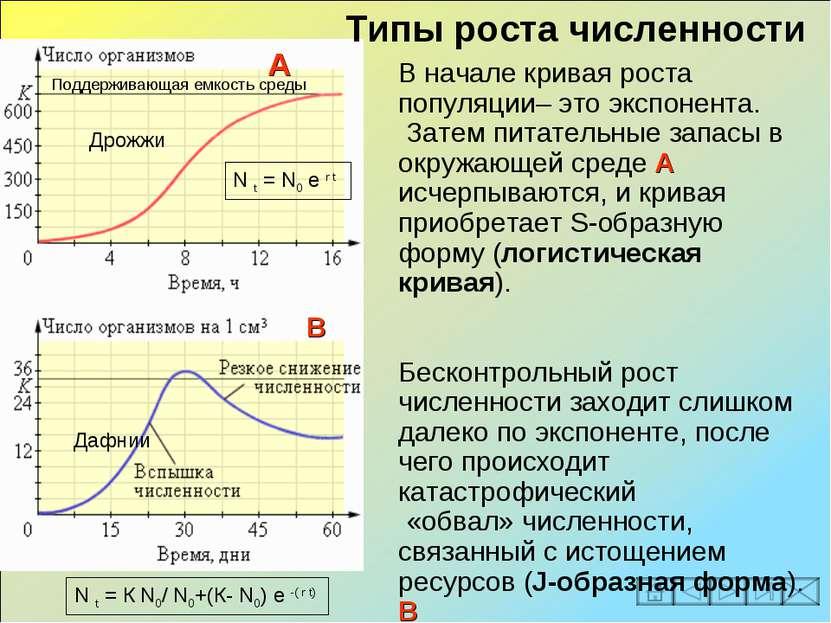 В начале кривая роста популяции– это экспонента. Затем питательные запасы в о...