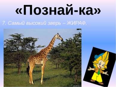 «Познай-ка» 7. Самый высокий зверь – ЖИРАФ.
