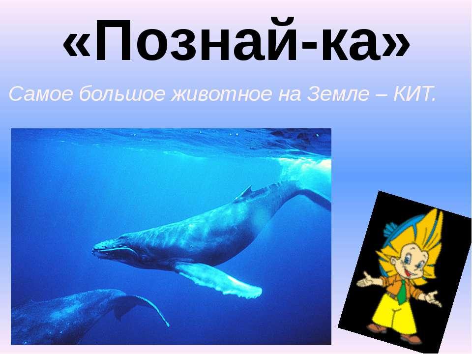 «Познай-ка» 1. Самое большое животное на Земле – КИТ.