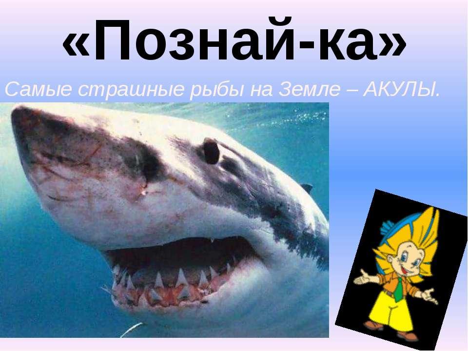«Познай-ка» 2. Самые страшные рыбы на Земле – АКУЛЫ.