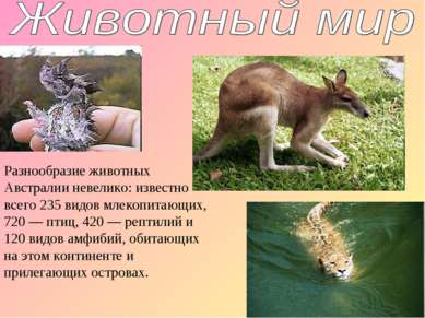 Разнообразие животных Австралии невелико: известно всего 235 видов млекопитаю...
