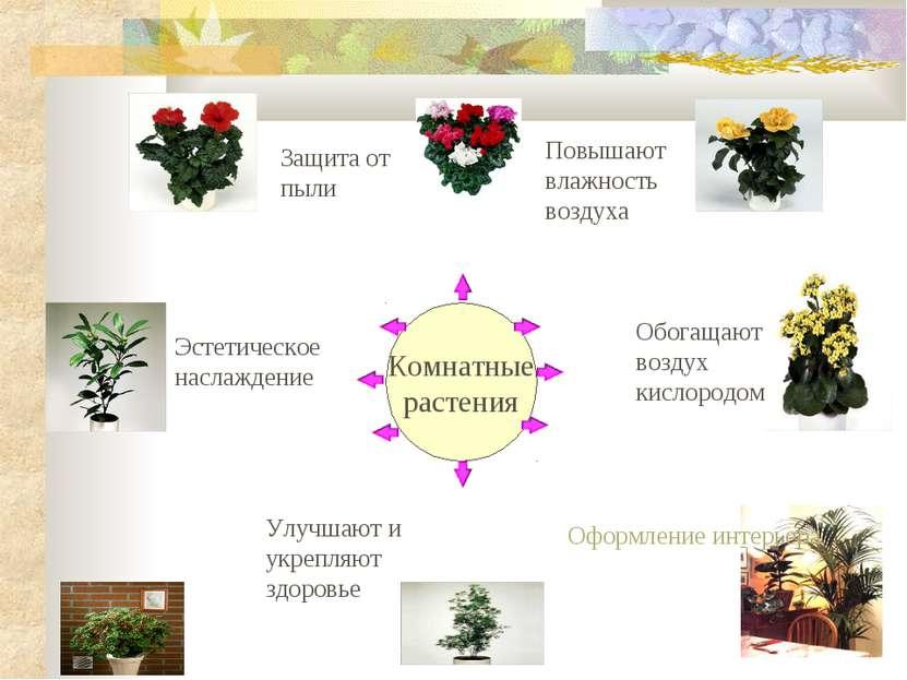 Комнатные растения Комнатные растения Защита от пыли Повышают влажность возду...