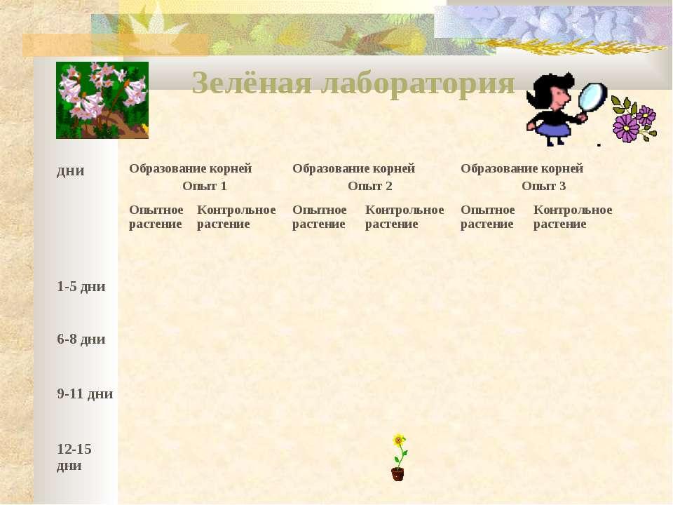 Зелёная лаборатория дни Образование корней Опыт 1 Образование корней Опыт 2 О...