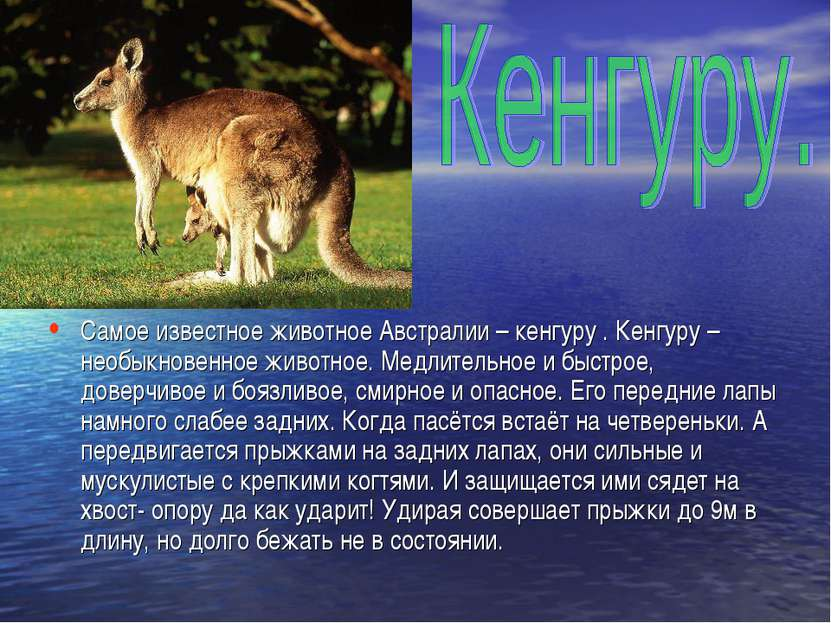 Самое известное животное Австралии – кенгуру . Кенгуру – необыкновенное живот...
