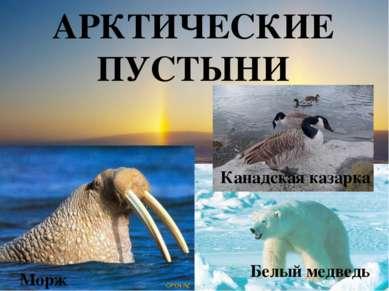 АРКТИЧЕСКИЕ ПУСТЫНИ Канадская казарка Белый медведь Морж