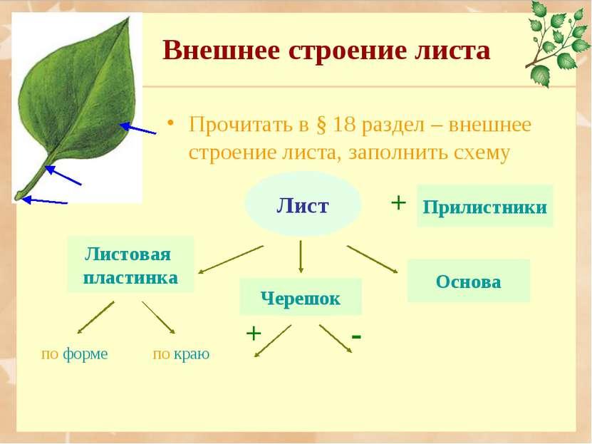 Внешнее строение листа Работа с книгой Прочитать в § 18 раздел – внешнее стро...