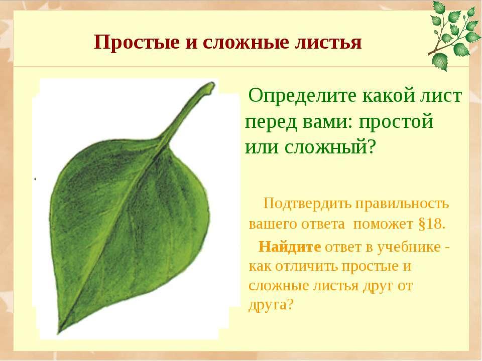 Простые и сложные листья Определите какой лист перед вами: простой или сложны...