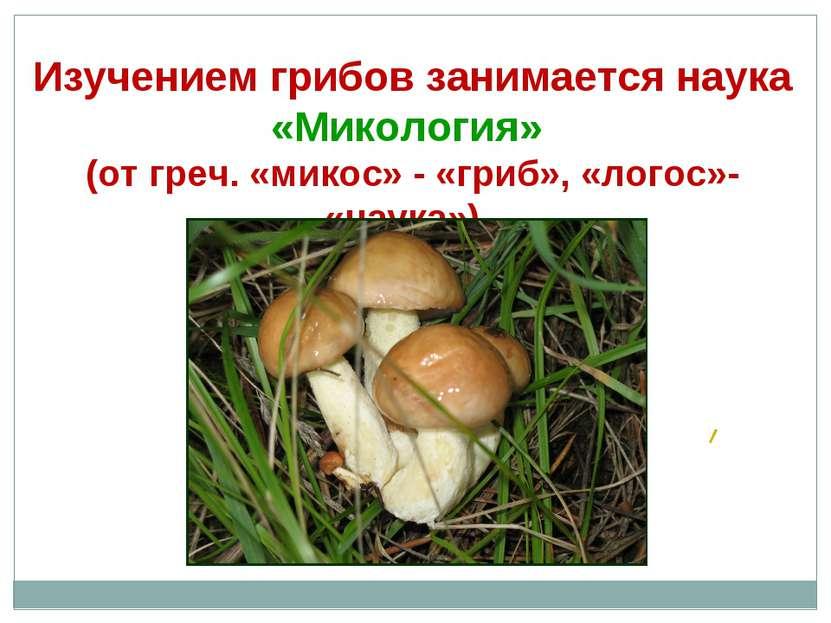Изучением грибов занимается наука «Микология» (от греч. «микос» - «гриб», «ло...