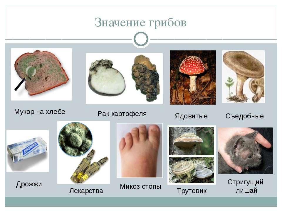 Значение грибов Мукор на хлебе Рак картофеля Ядовитые Съедобные Дрожжи Лекарс...