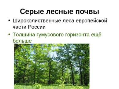 Серые лесные почвы Широколиственные леса европейской части России Толщина гум...