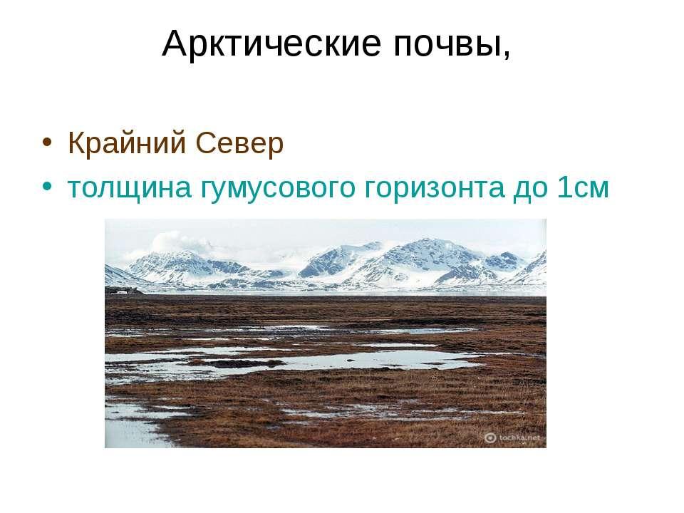 Арктические почвы, Крайний Север толщина гумусового горизонта до 1см