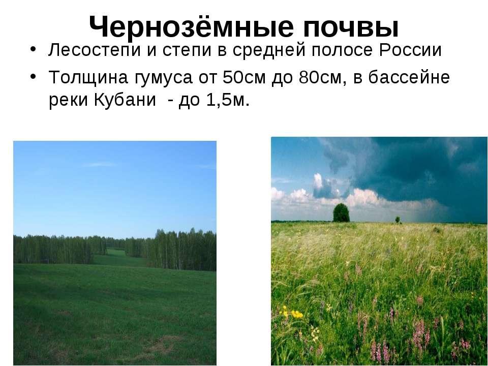 Чернозёмные почвы Лесостепи и степи в средней полосе России Толщина гумуса от...