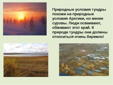 Природные условия тундры похожи на природные условия Арктики, но менее суровы...