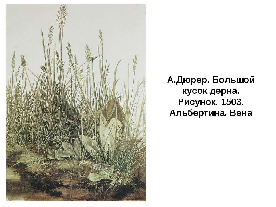 А.Дюрер. Большой кусок дерна. Рисунок. 1503. Альбертина. Вена