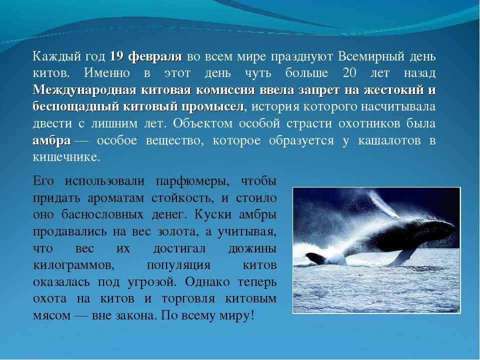 Каждый год 19 февраля во всем мире празднуют Всемирный день китов. Именно в э...