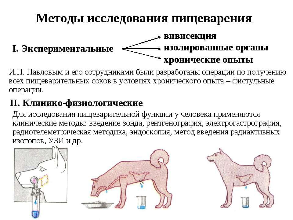 Методы исследования пищеварения Для исследования пищеварительной функции у че...