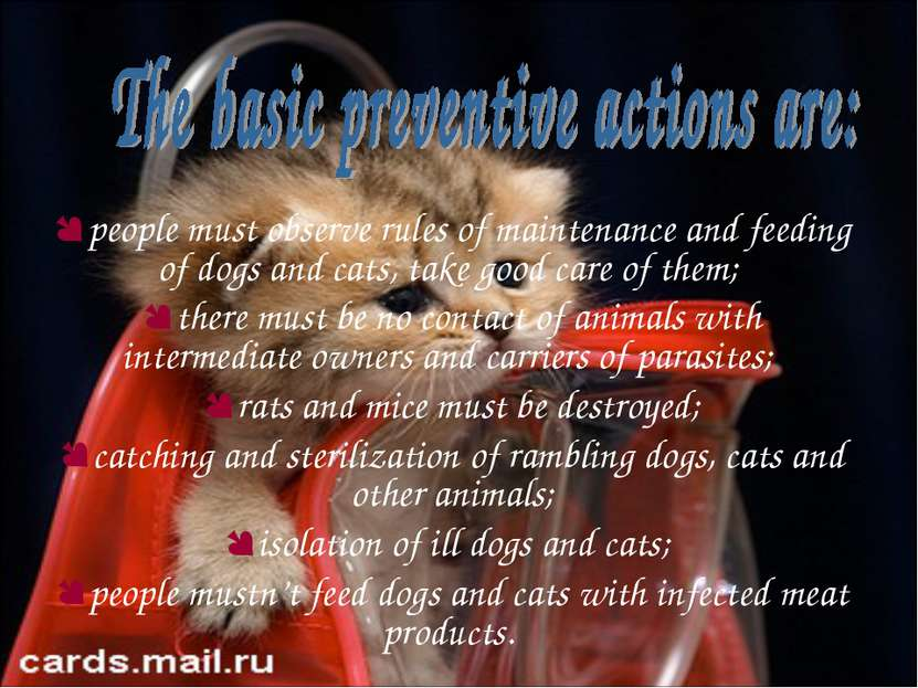 people must observe rules of maintenance and feeding of dogs and cats, take g...