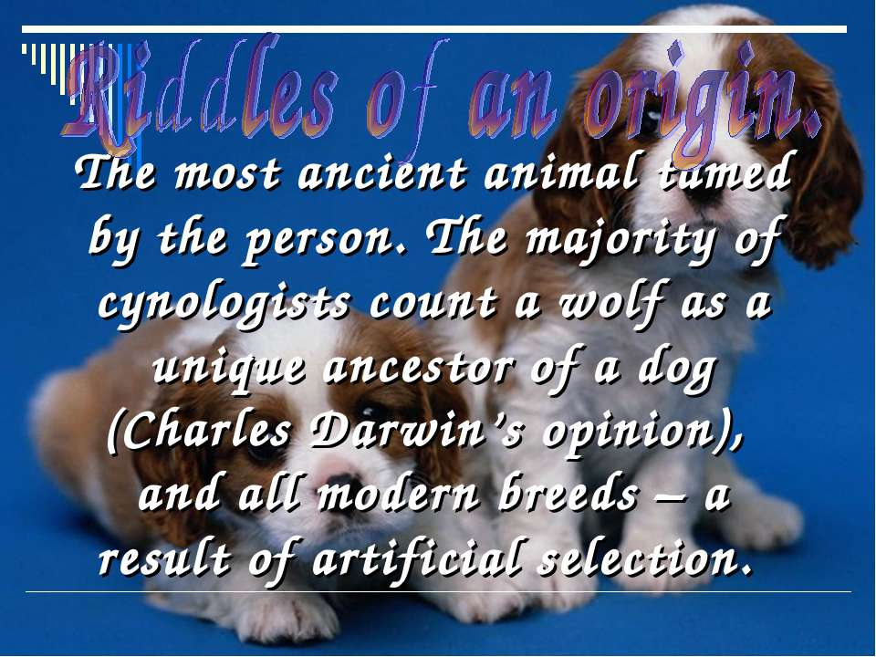 The most ancient animal tamed by the person. The majority of cynologists coun...