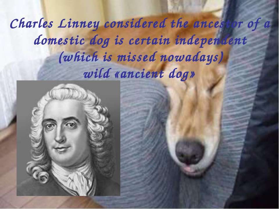 Charles Linney considered the ancestor of a domestic dog is certain independe...