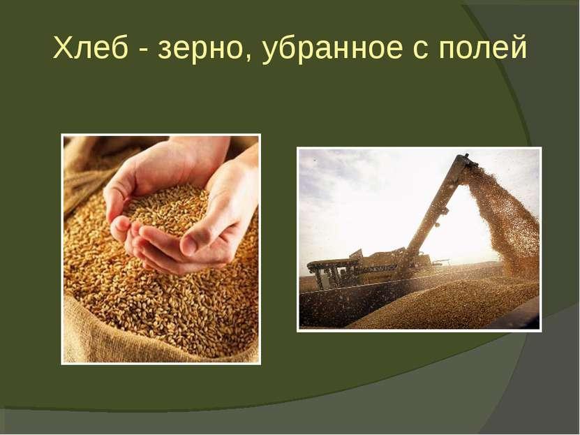 Хлеб - зерно, убранное с полей
