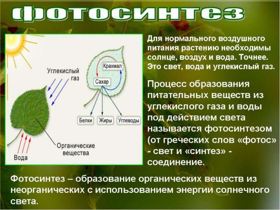 Почвенное питание растений  Питание растений биология 6 класс реферат