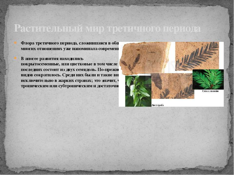 Флора третичного периода, сложившаяся в общих чертах в конце мела, во многих ...