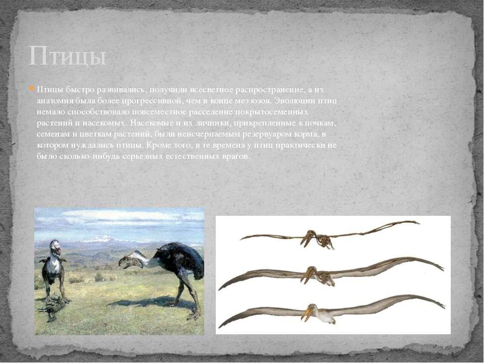 Птицы быстро развивались, получили всесветное распространение, а их анатомия ...