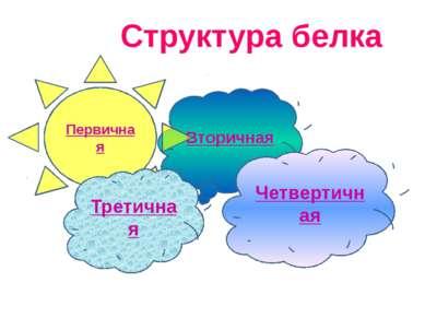 Вторичная Структура белка . . Первичная Третичная Четвертичная