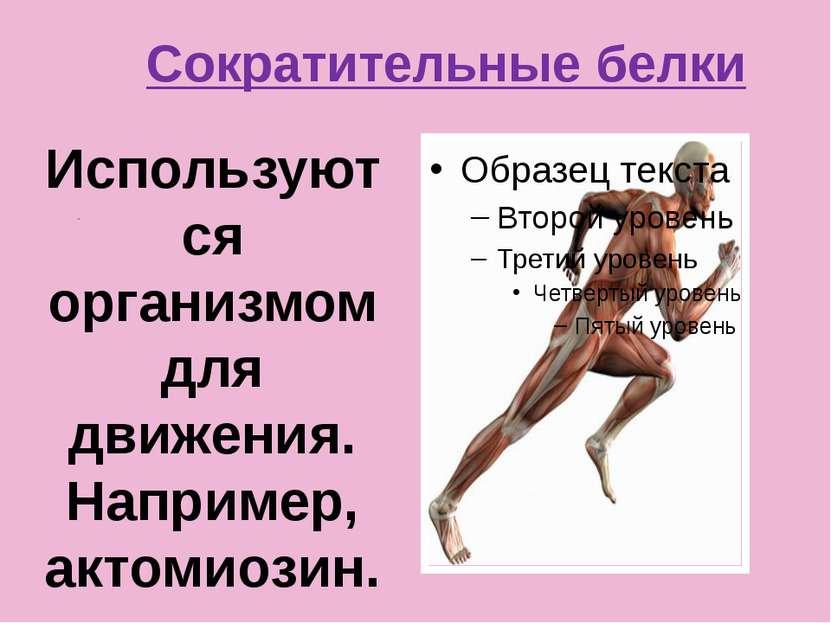 Сократительные белки . Используются организмом для движения. Например, актоми...
