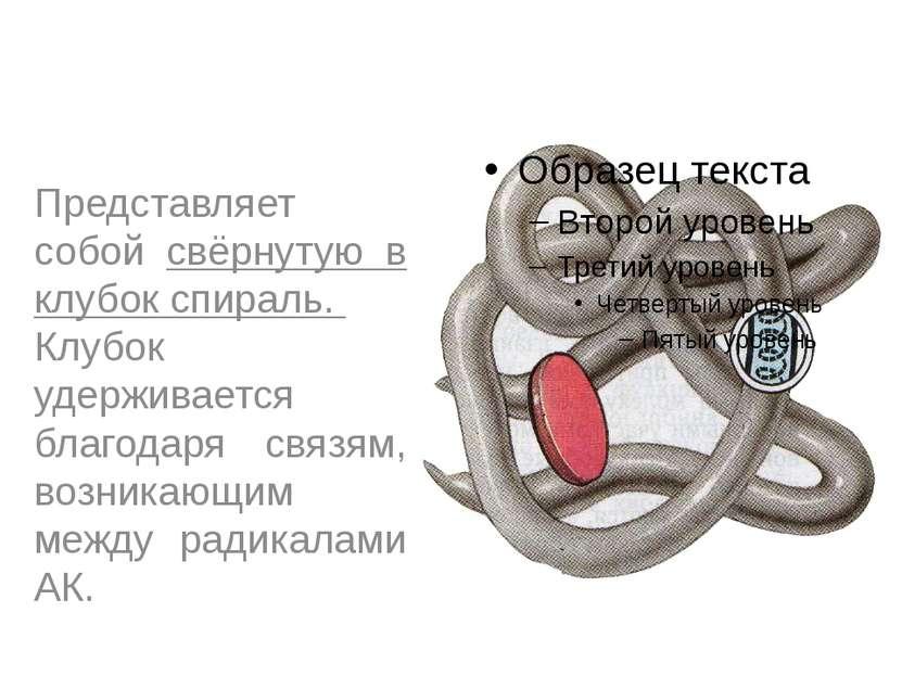 Третичная структура Представляет собой свёрнутую в клубок спираль. Клубок уде...