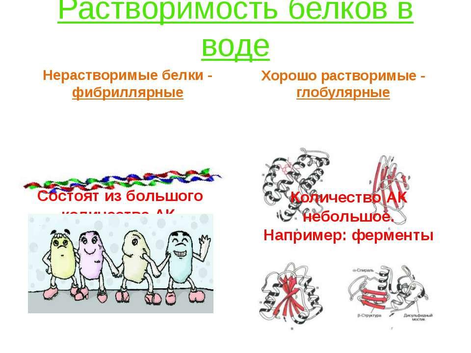 Растворимость белков в воде Нерастворимые белки - фибриллярные Состоят из бол...
