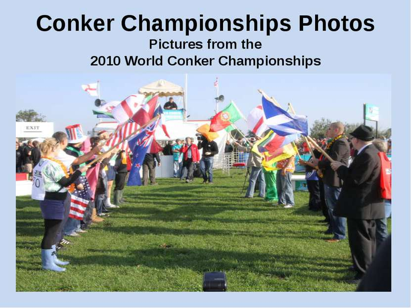 Conker Championships Photos Pictures from the 2010 World Conker Championships