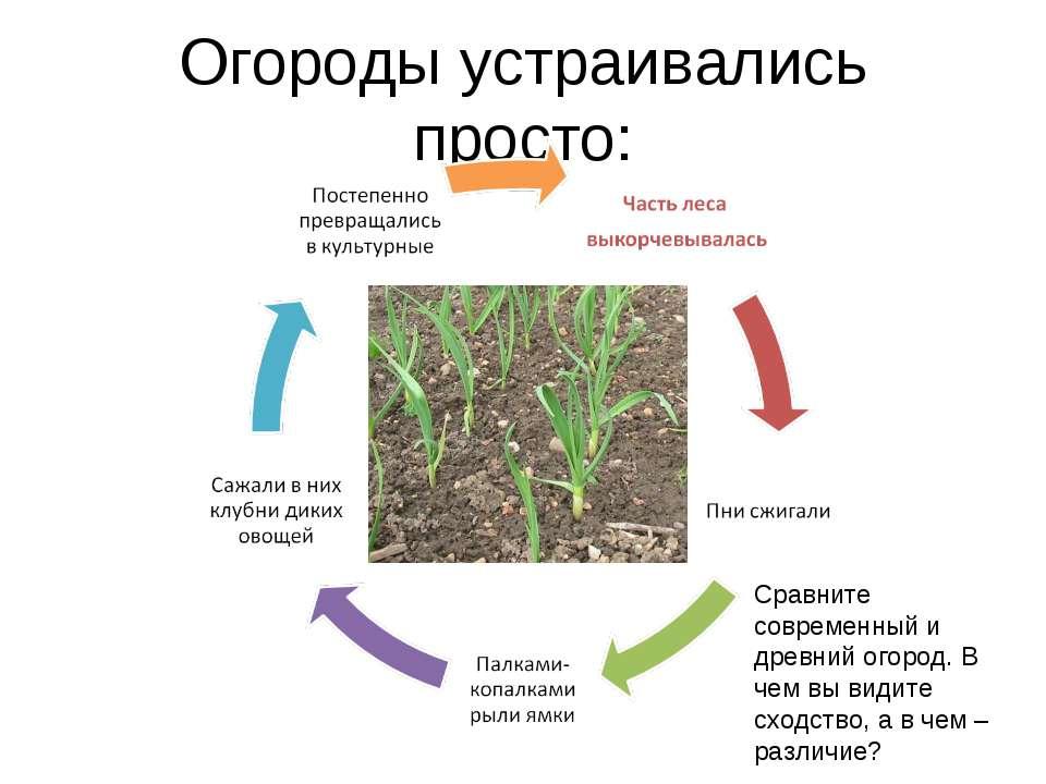 Огороды устраивались просто: Сравните современный и древний огород. В чем вы ...