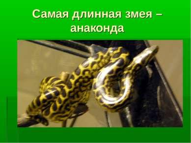 Самая длинная змея – анаконда