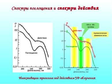 Спектры поглощения и спектры действия Длина волны, нм 100 10 1 0,1 0,01 s s И...