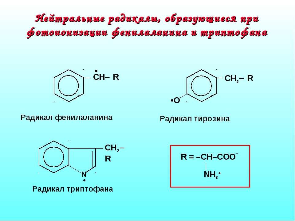 Нейтральные радикалы, образующиеся при фотоионизации фенилаланина и триптофана
