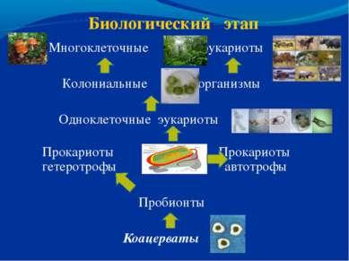 Биологический этап Многоклеточные эукариоты Колониальные организмы Одноклеточ...