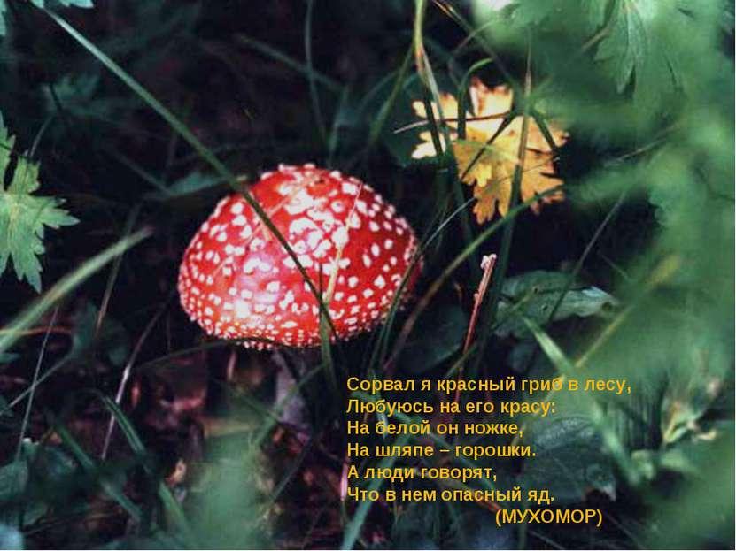 Сорвал я красный гриб в лесу, Любуюсь на его красу: На белой он ножке, На шля...