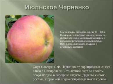 Сорт выведен С.Ф. Черненко от скрещивания Аниса алого с Папировкой. Это летни...