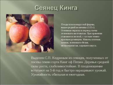 Выделен С.П. Кедриным из сеянцев, полученных от посева семян сорта Кинг оф Пе...