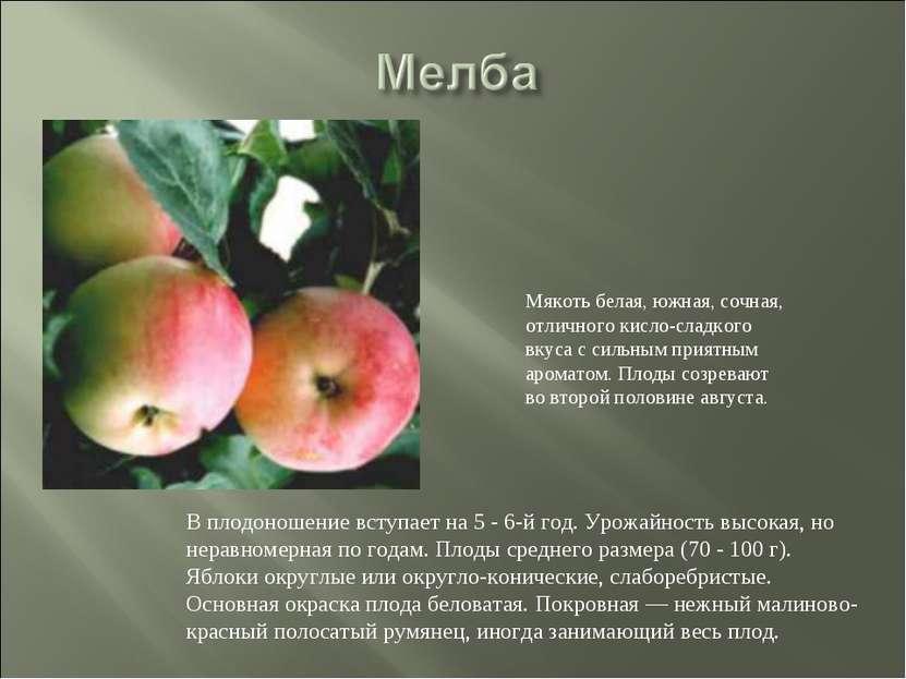 В плодоношение вступает на 5 - 6-й год. Урожайность высокая, но неравномерная...
