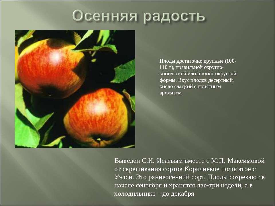 Выведен С.И. Исаевым вместе с М.П. Максимовой от скрещивания сортов Коричнево...