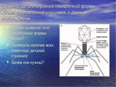 Сравнить детали строения неклеточной формы жизни, изготовленной учащимся, с д...