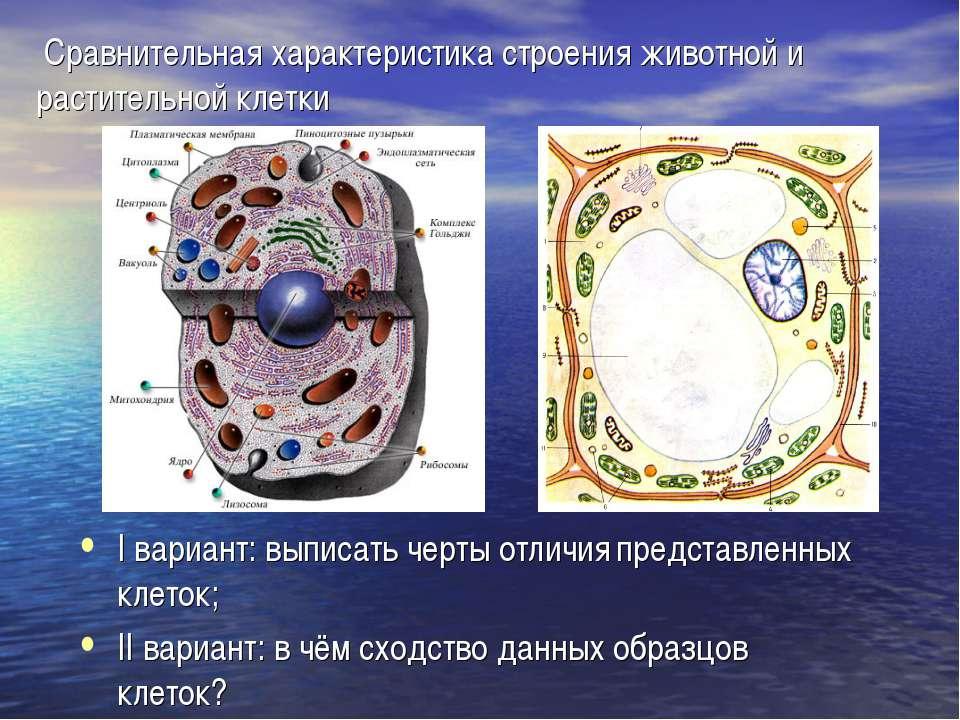 Сравнительная характеристика строения животной и растительной клетки I вариан...