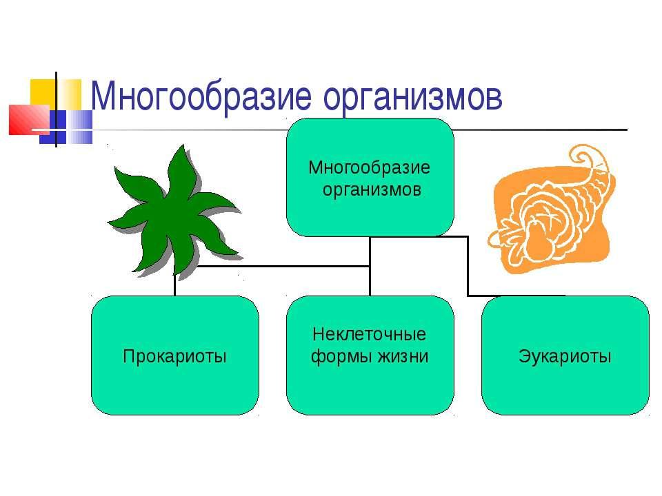 Многообразие организмов