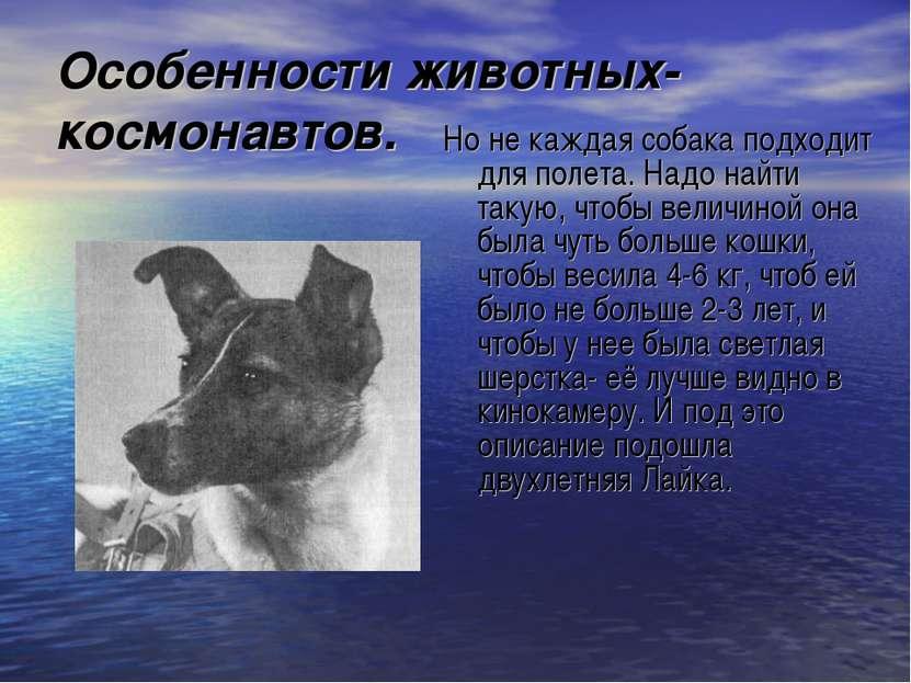 Особенности животных-космонавтов. Но не каждая собака подходит для полета. На...