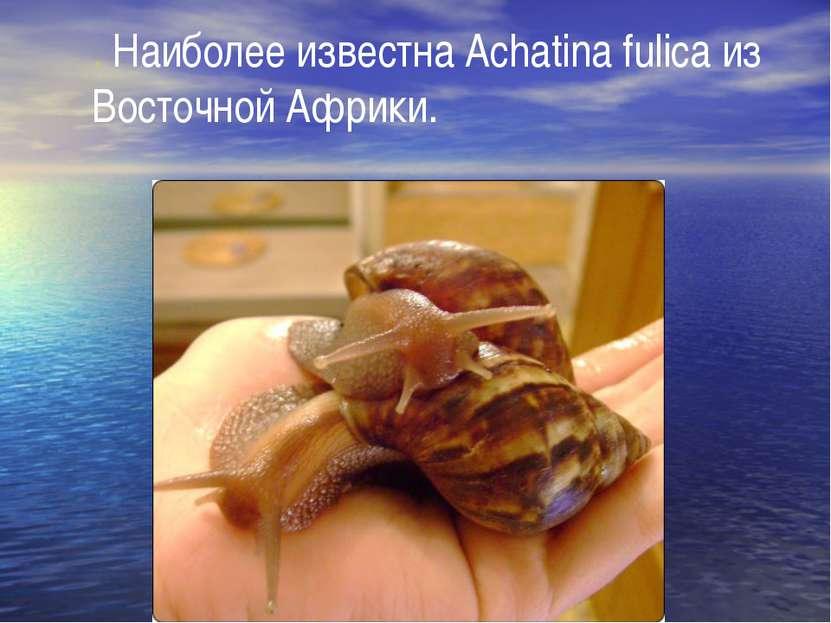 . Наиболее известна Achatina fulica из Восточной Африки.