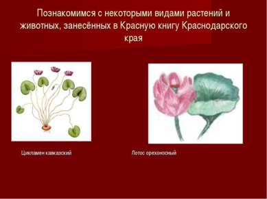 Познакомимся с некоторыми видами растений и животных, занесённых в Красную кн...