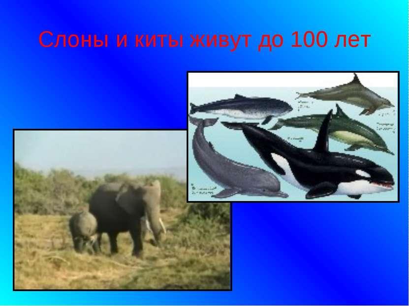 Слоны и киты живут до 100 лет
